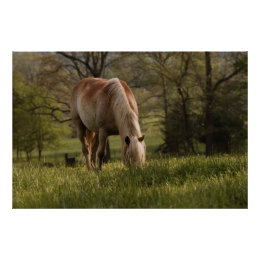 Horses grazing in meadow, Cades Cove, Great Poster