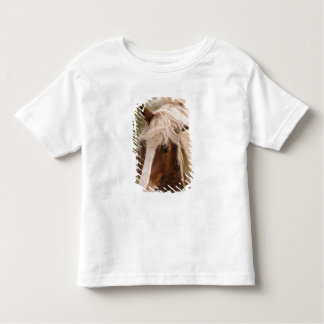 Horses grazing in meadow, Cades Cove, Great Shirt