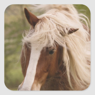 Horses grazing in meadow, Cades Cove, Great Square Sticker