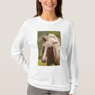 Horses grazing in meadow, Cades Cove, Great T-Shirt