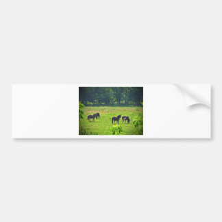 Horses Grazing in The Green Pasture Bumper Stickers