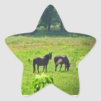 Horses Grazing in The Green Pasture Star Sticker