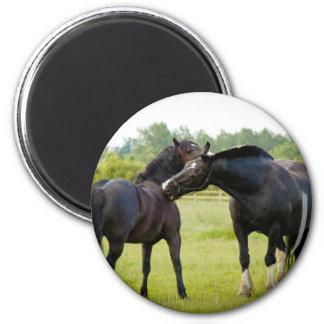 Horses  Grazing Magnet