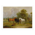 Horses Grazing: Mares and Foals in a Field (oil on Postcard