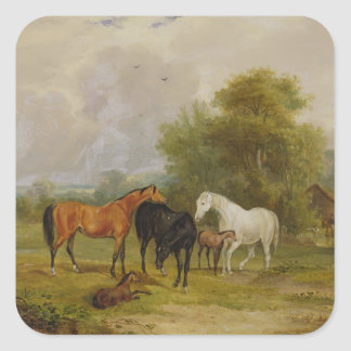 Horses Grazing: Mares and Foals in a Field (oil on Square Sticker