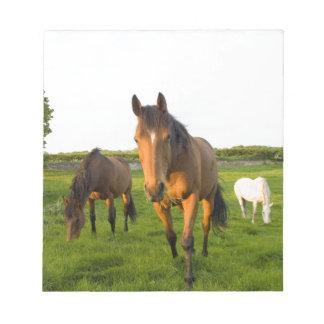 Horses Grazing Note Pad