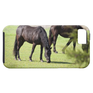 horses grazing on a horse farm iPhone SE/5/5s case