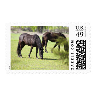 horses grazing on a horse farm postage
