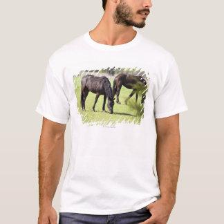 horses grazing on a horse farm T-Shirt
