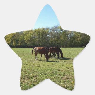 horses   grazing photo by Gwen Billips Star Sticker