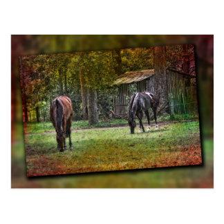 Horses grazing postcard