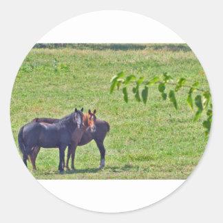 Horses Hanging Around Classic Round Sticker
