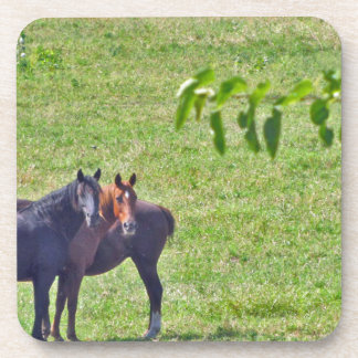 Horses Hanging Around Coasters