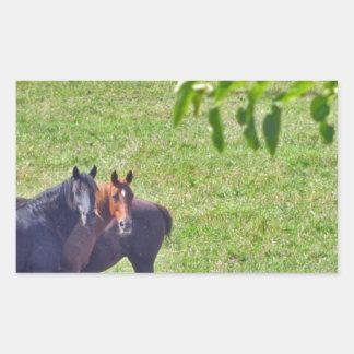 Horses Hanging Around Rectangular Sticker