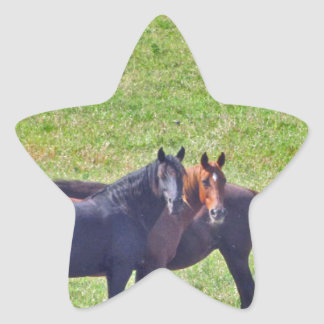 Horses Hanging Around Star Sticker