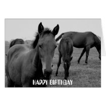 HORSES HAPPY BIRTHDAY card design