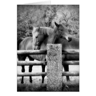 Horses Hugging - Horse Love Photograph Card