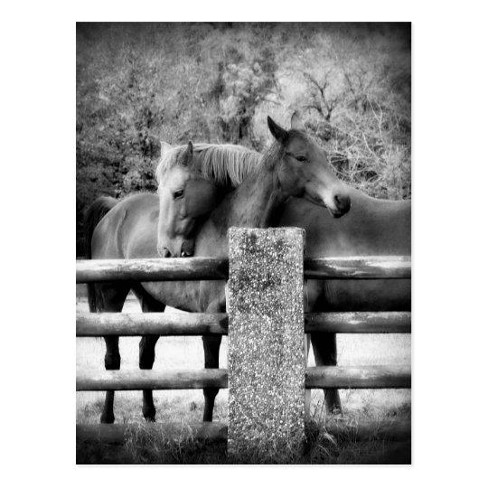 Horses Hugging - Horse Love Photograph Postcard