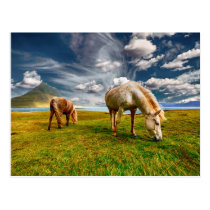 Horses Iceland Grazing Postcard