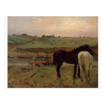 Horses in a Meadow by Edgar Degas Postcard