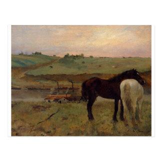 Horses in a Meadow by Edgar Degas Postcard