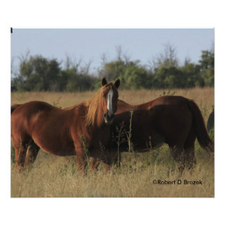 Horses in a Pasture Photo Print