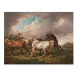 Horses in a storm postcard