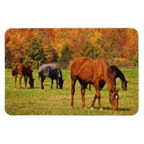 Horses in Autumn Magnet