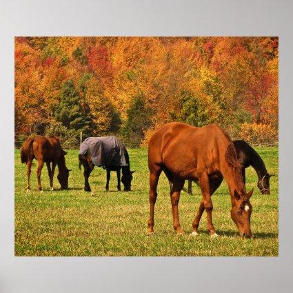 Horses in Autumn Poster