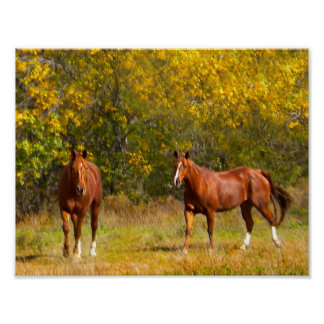 Horses in Autumn Print
