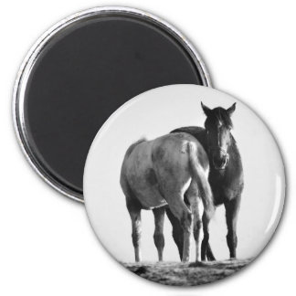 Horses in Black and White Magnet