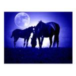 Horses in Blue Night Postcard