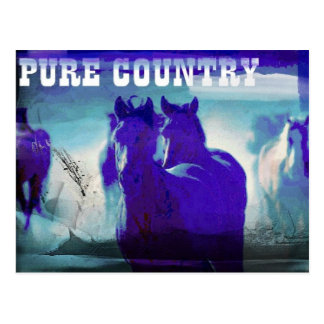 Horses In Blue Postcard