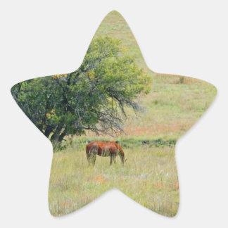 Horses in Field Star Sticker