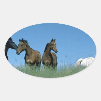 Horses in Field Oval Sticker