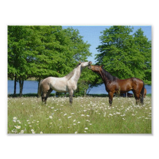 Horses in Flower Meadow Poster