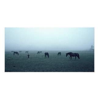 Horses in fog photo card