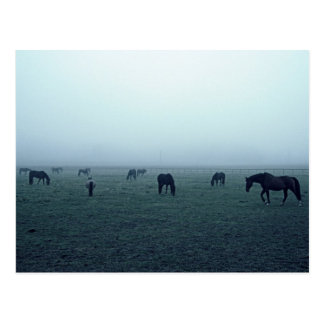 Horses in fog postcard