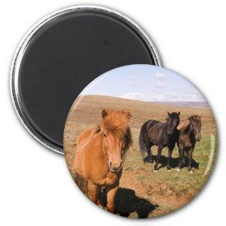 Horses in Krisuvik 2 Inch Round Magnet