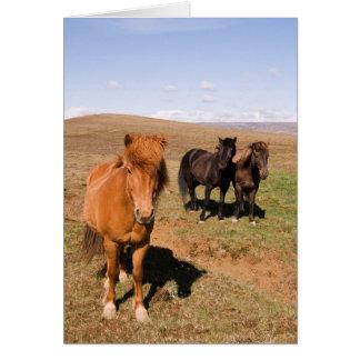 Horses in Krisuvik Card