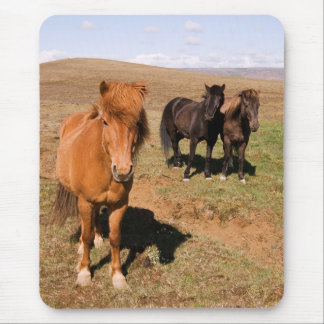 Horses in Krisuvik Mouse Pad
