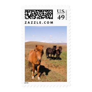 Horses in Krisuvik Stamp