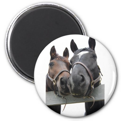 Horses in Love 2 Inch Round Magnet