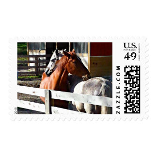 Horses in Love Postage