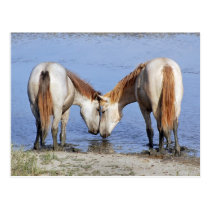 HORSES IN LOVE POSTCARD