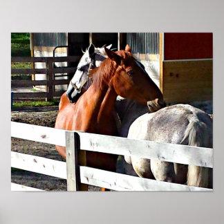 Horses in Love Poster