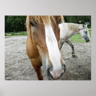 Horses in Ocala, Florida Art Poster