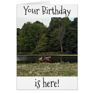 HORSES IN PASTURE ARE GREAT FOR YOUR BIRTHDAY CARD
