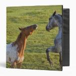 Horses in pasture near Polson, Montana 3 Ring Binders