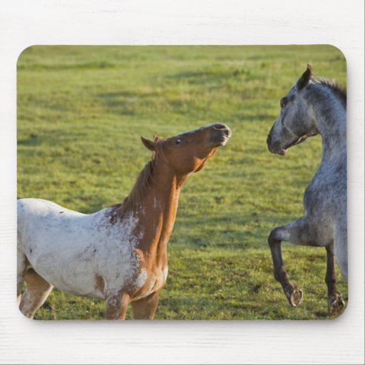Horses in pasture near Polson, Montana Mouse Pad